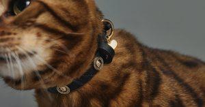 [Aldo] Get Paw Collection Pet Accessories at Aldo!